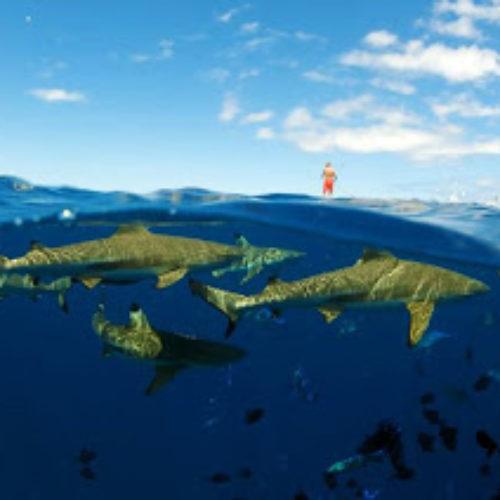 Bora Bora! Adventures in Paradise, Tahiti