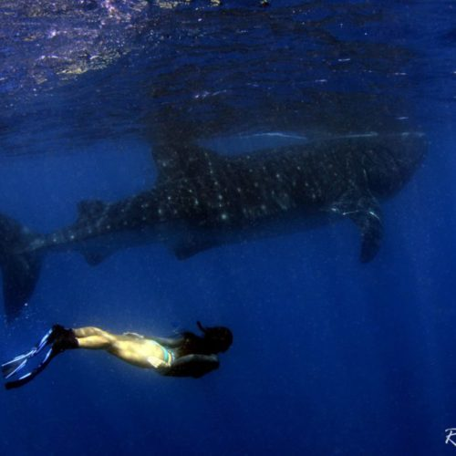 whale shot